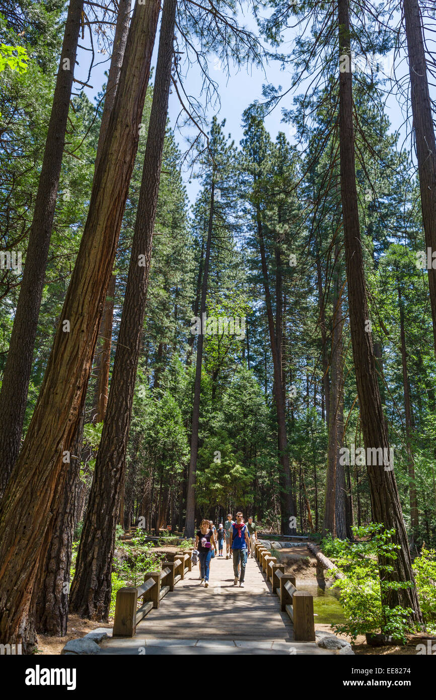 Walkers on the trail from Yosemite Village to Yosemite Falls, Yosemite Valley, Yosemite National Park, Northern - Stock Image