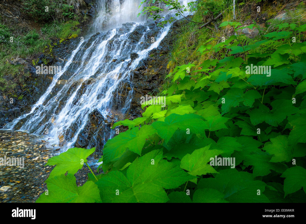 Ione Creek Falls, Selkirk Mountains, British Columbia, Canada - Stock Image