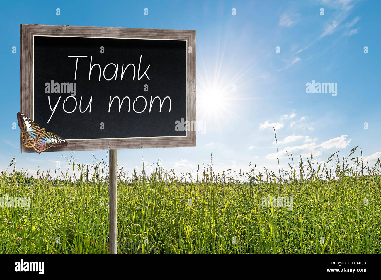 Blank chalkboard on a meadow with text Thank you mom - Stock Image
