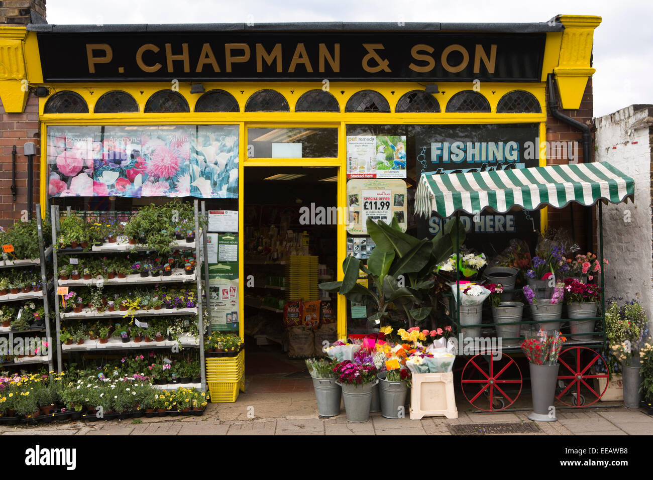 UK, London, Twickenham, King Street, P Chapman and son plant shop and nursery shop - Stock Image