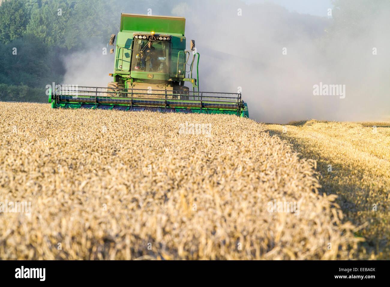 Combine harvester harvesting a wheat field, Burton Joyce, Nottinghamshire, England, UK - Stock Image