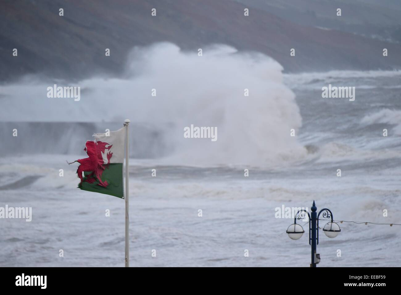 Aberystwyth, Wales, UK. 15th January, 2015. UK Weather: A battered and torn welsh flag flies as gale force winds - Stock Image