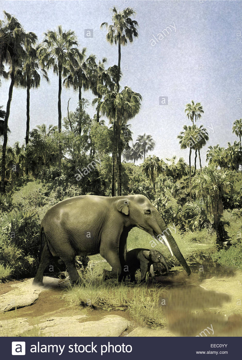 Gomphotherium guiding its offspring. Gomphotherium is a four-tusked mastodon found throughout the world during the - Stock Image