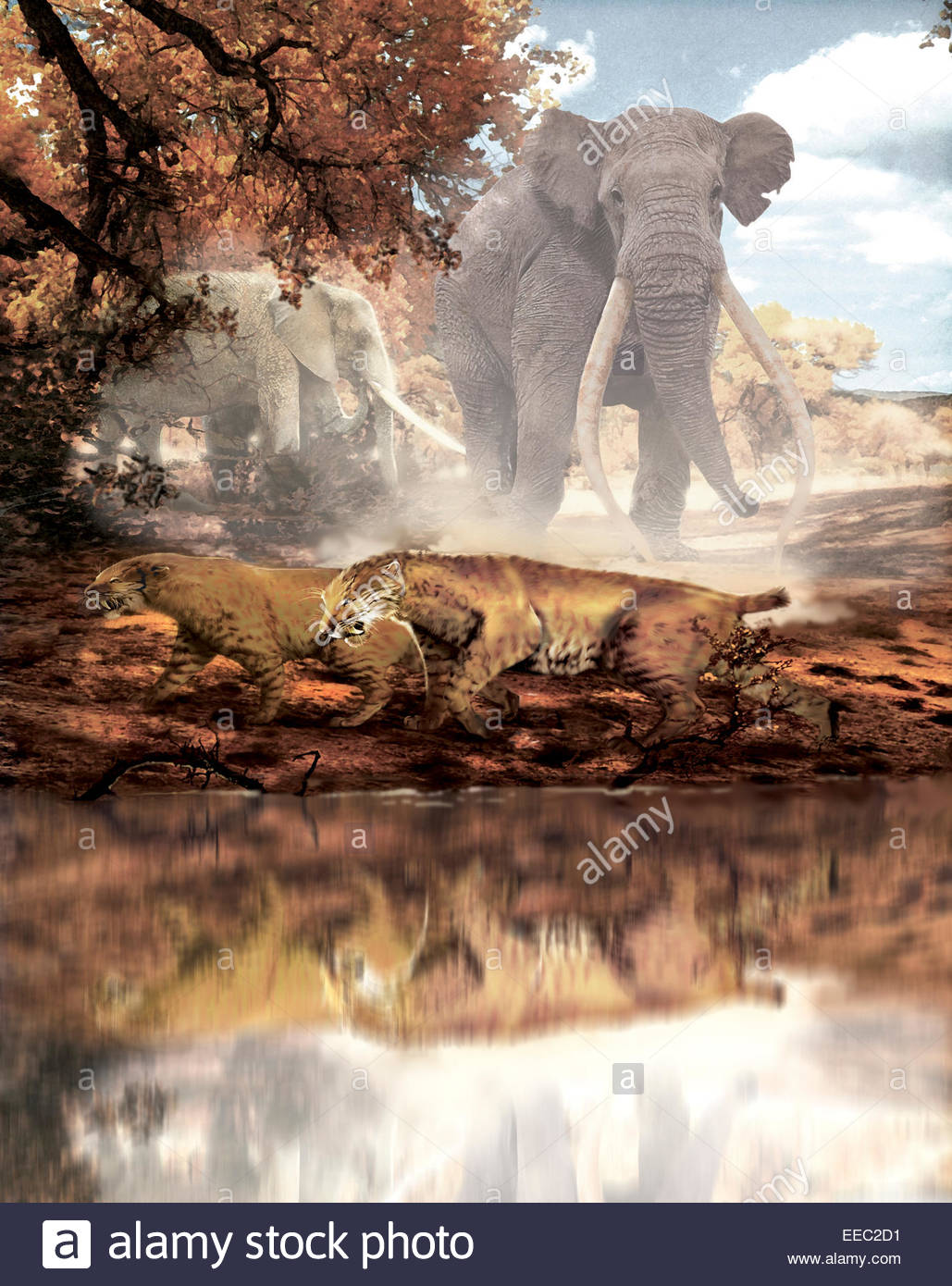 A pair of Homotherium saber-toothed cats walk along the water's edge with two large Anancus mammals in the background. - Stock Image