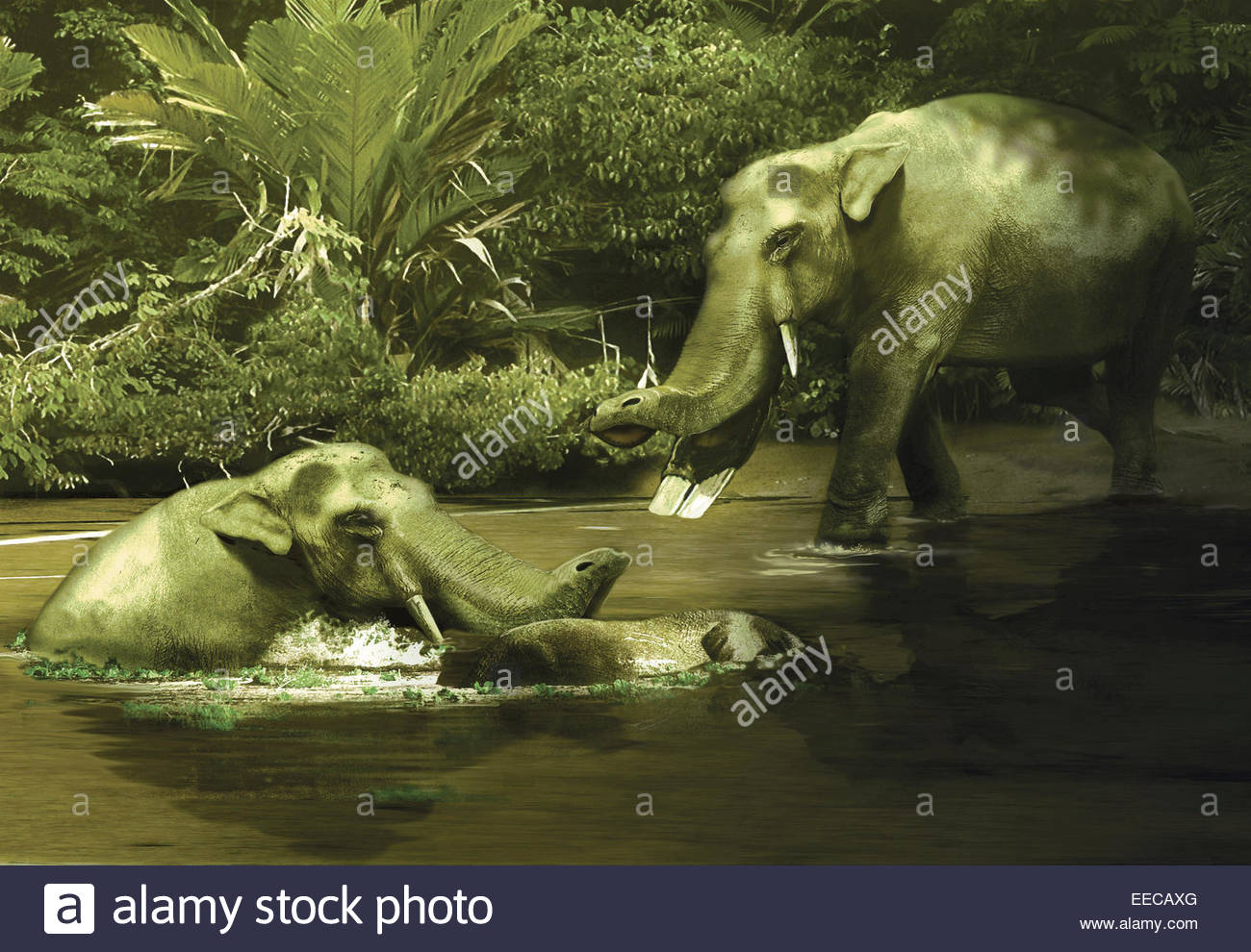 A pair of Platybelodon grazing on water, weeds and plants from the Miocene epoch of Europe. - Stock Image