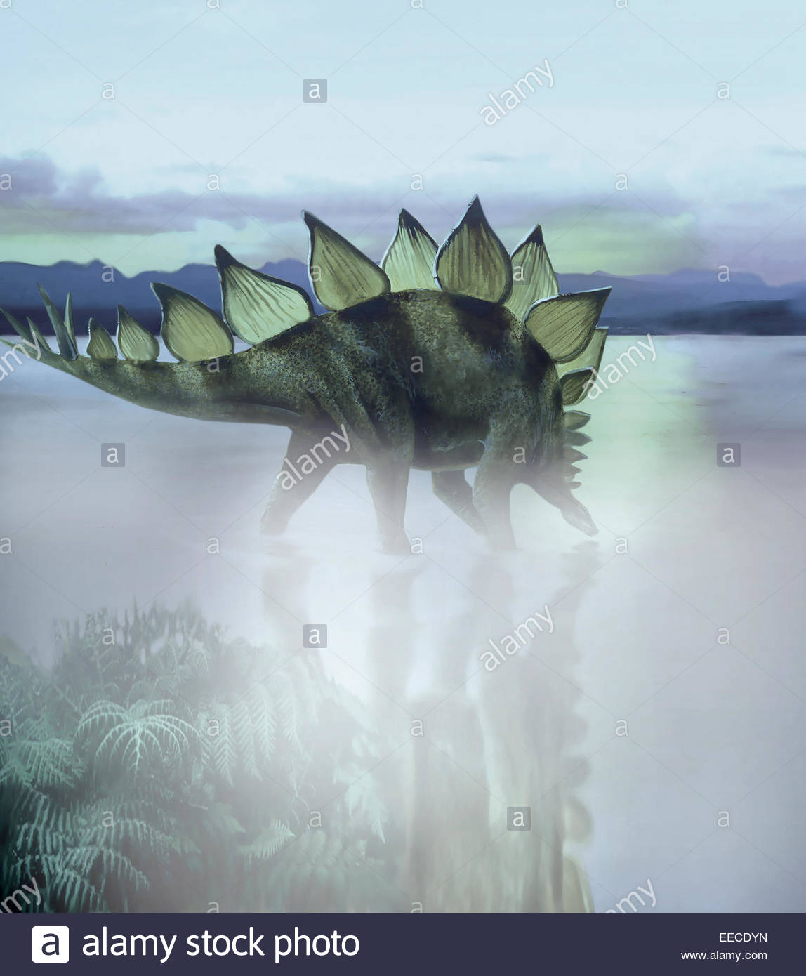 A Stegosaurus dinosaur grazing in a prehistoric lake. The plates on a Stegosaurus back were once believed to be - Stock Image