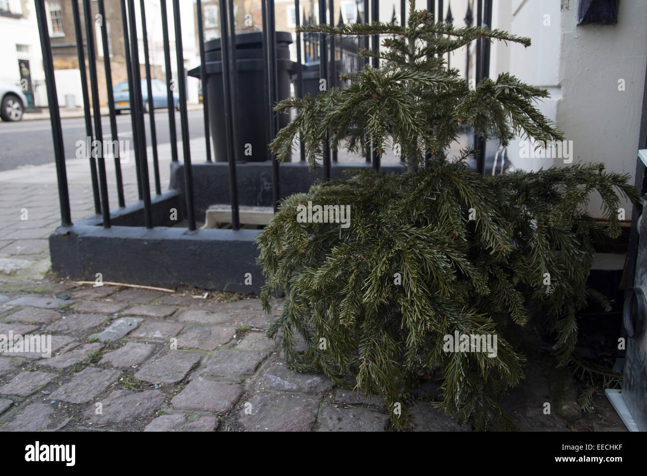 Christmas tree left out for the bin men in January. Unwanted rubbish. January blues. Xmas is over. Waste - Stock Image