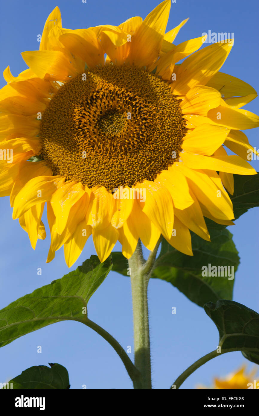 Well Drained Stock Photos & Well Drained Stock Images - Alamy