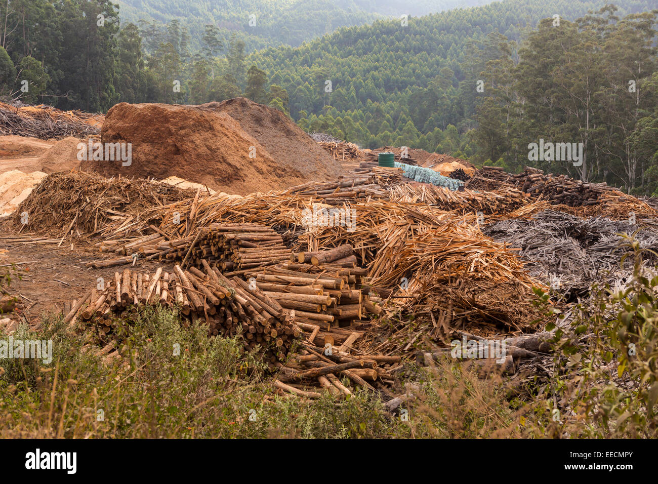 SWAZILAND, AFRICA - Timber industry in Hhohho District. Piles of timber, sawdust and slash near mill. Stock Photo