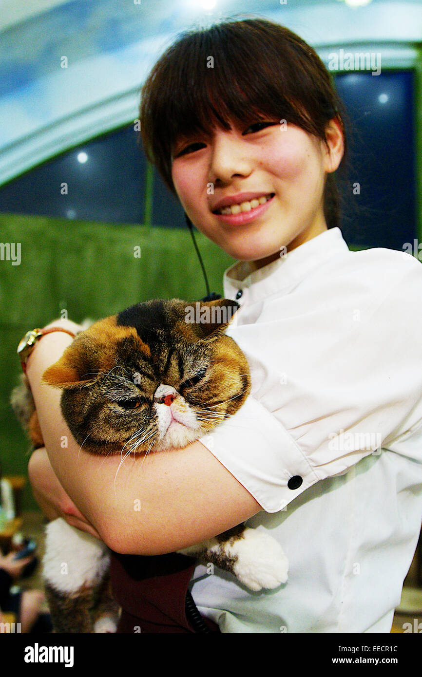 Tokyo, Japan. 15th January, 2015. A staff holds a cat at the 'Temari No Uchi' Cat Cafe in Tokyo, Japan. - Stock Image