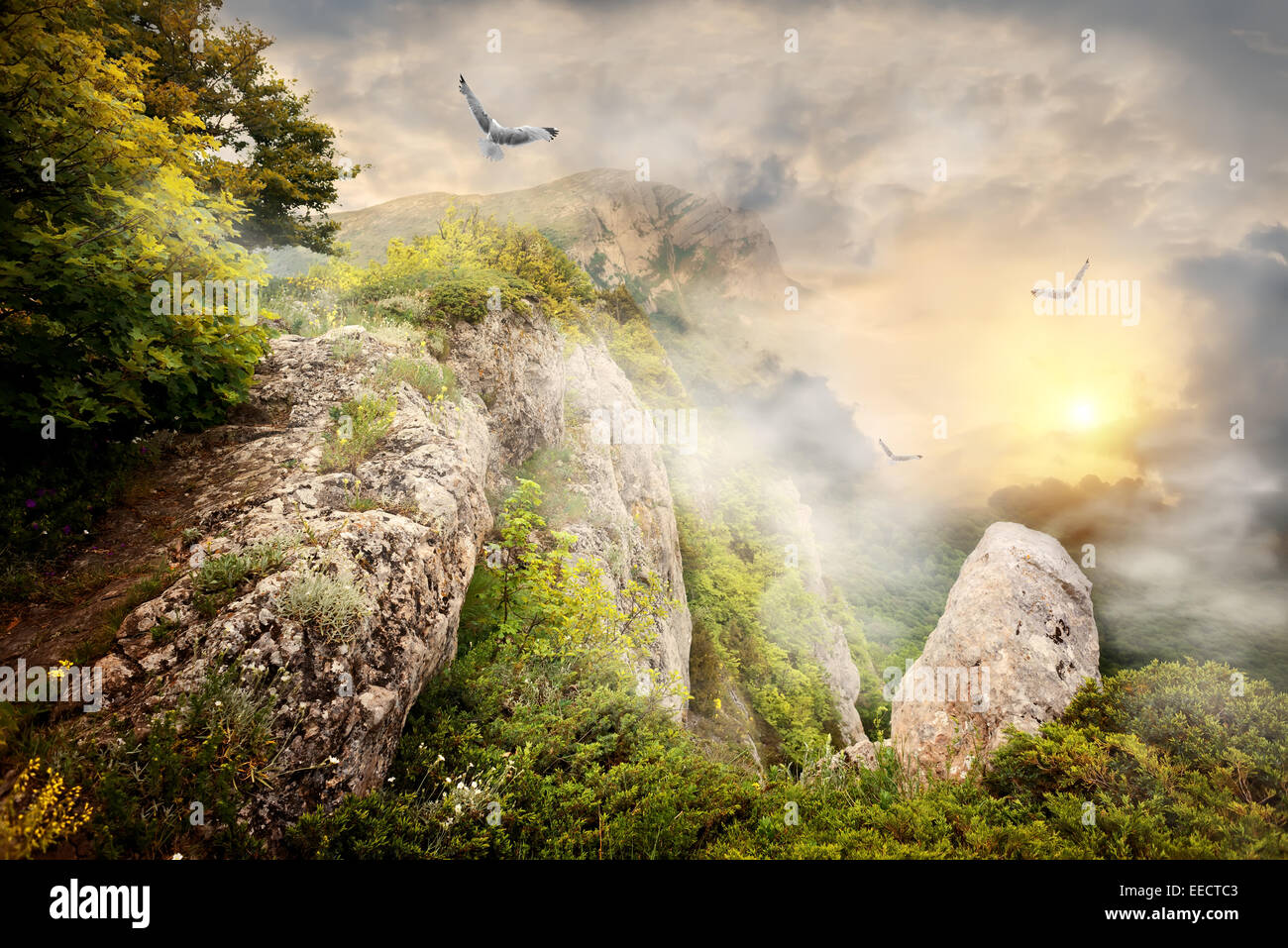 Morning fog in the mountains and big birds - Stock Image