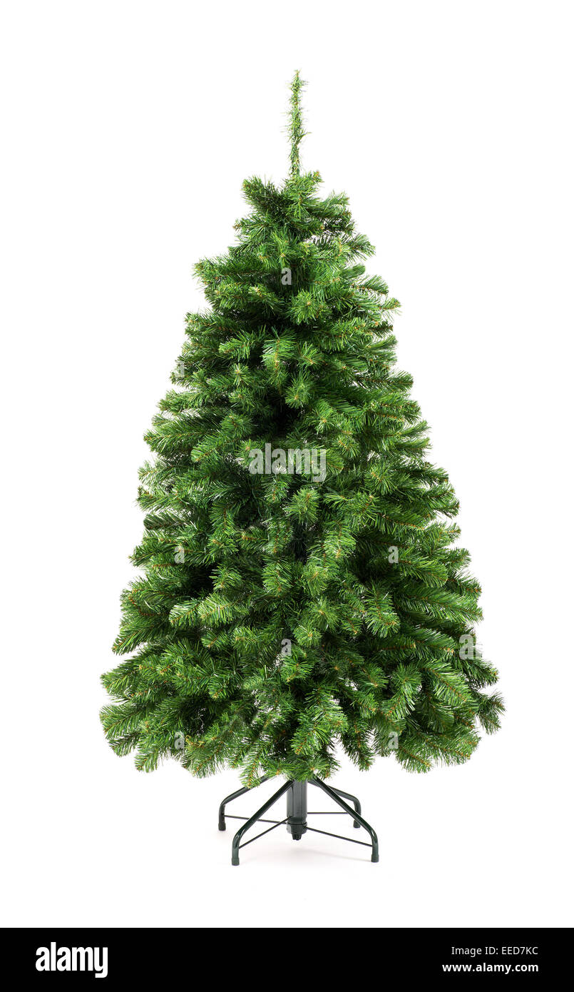 Bare undecorated green Christmas tree - Stock Image