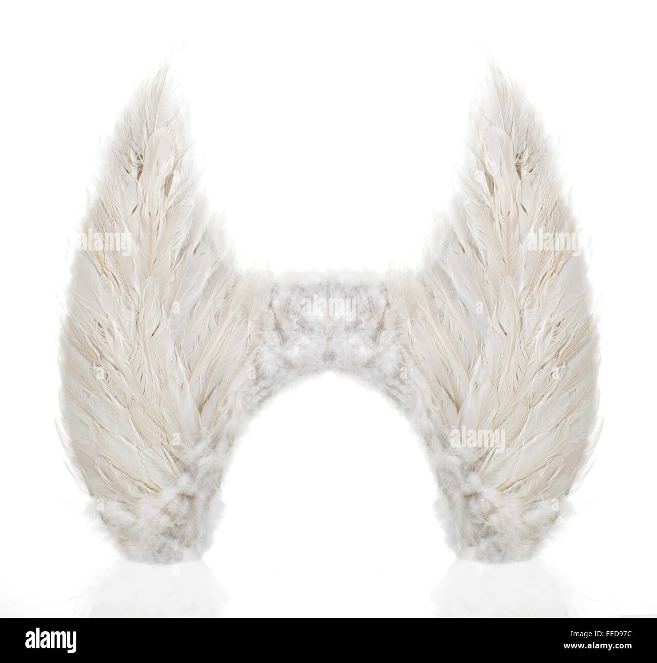 Pair of wings made from white feathers - Stock Image