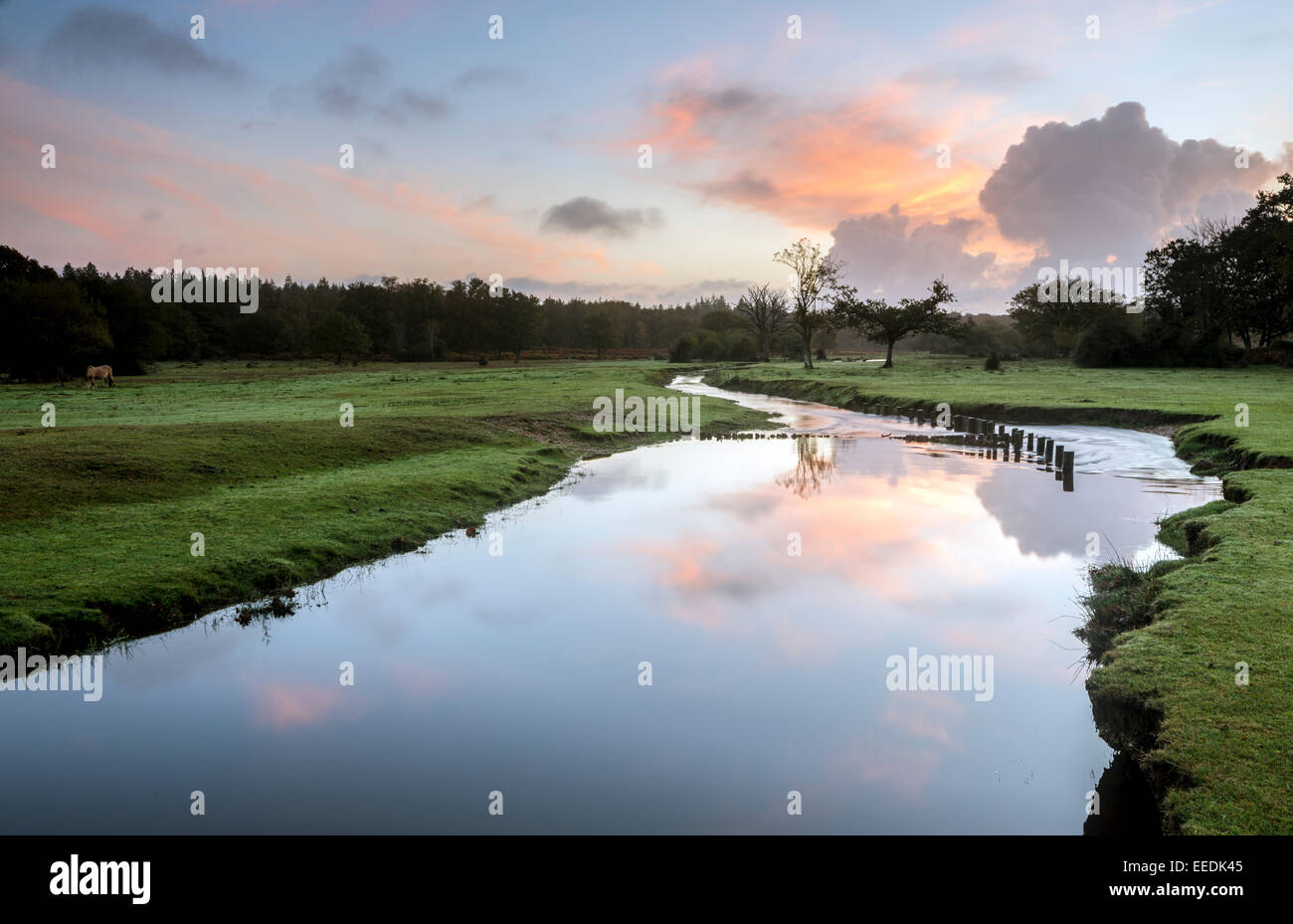 A view of Ober Water in the New Forest. Stock Photo