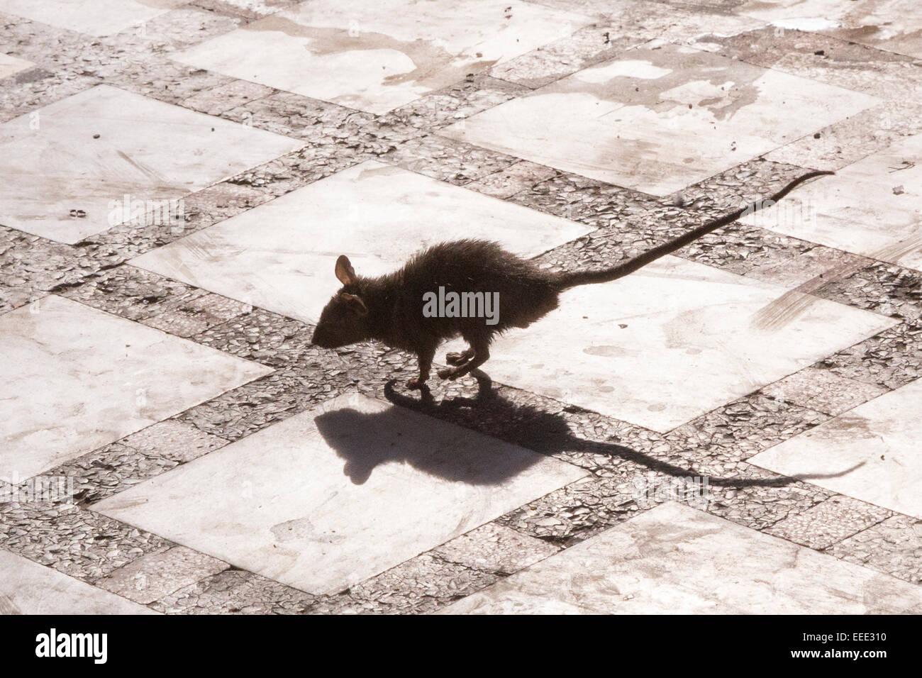 Chinese Zodiac Rat | Year of the Rat | Famous Birthdays