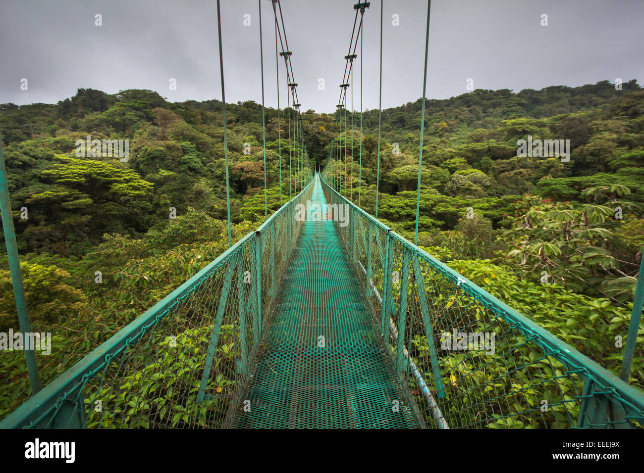High suspended bridge over the cloud-forest from Costa Rica - Stock Image