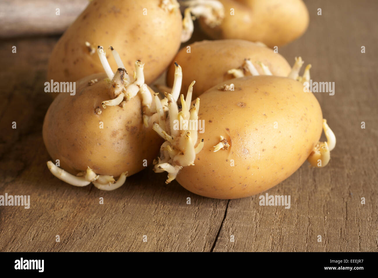 Potato Eyes Sprouting Stock Photos Potato Eyes Sprouting Stock