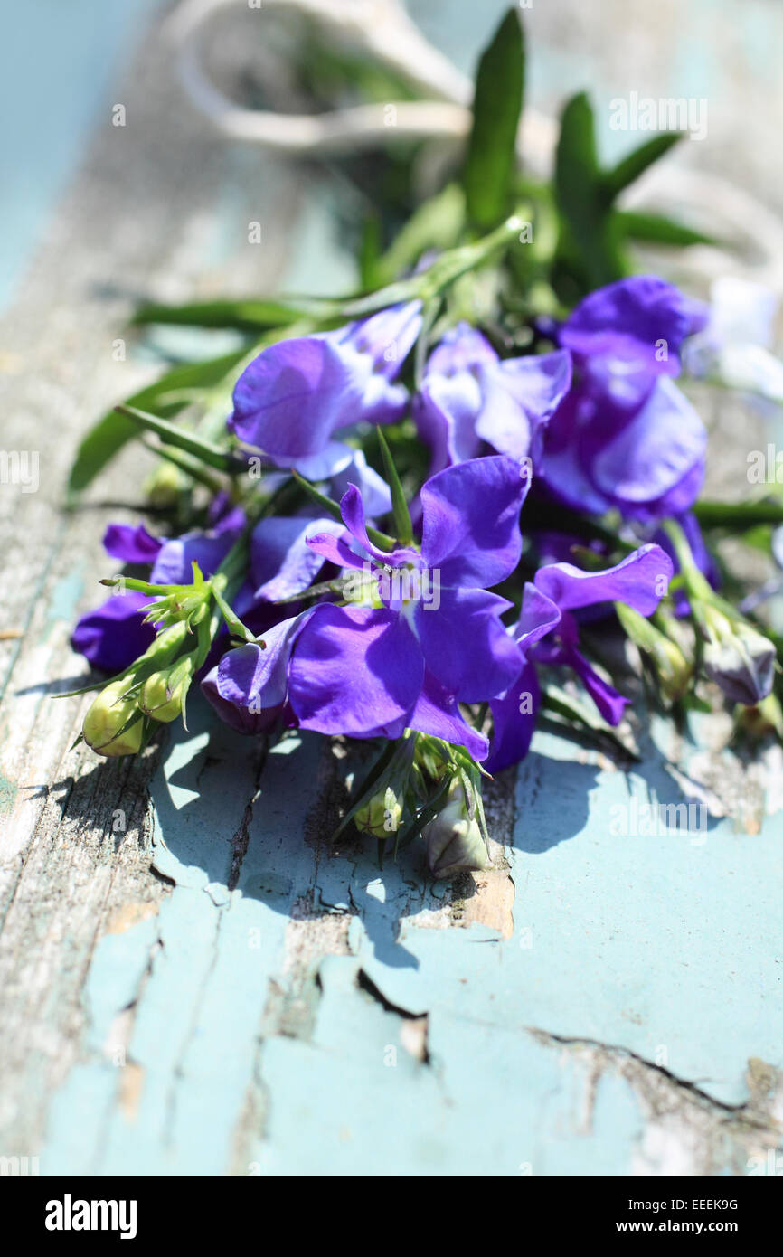 Pretty lobelia flowers on the old rustic wooden table close up - Stock Image