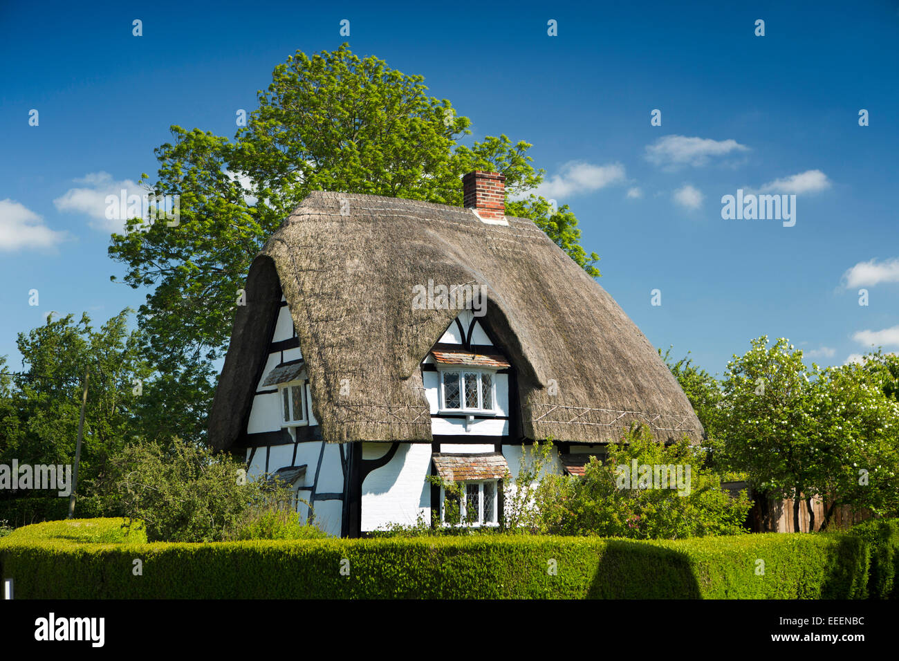 UK, England, Wiltshire, Vale of Pewsey, Bishop Cannings, idyllic timber framed thatched country cottage - Stock Image