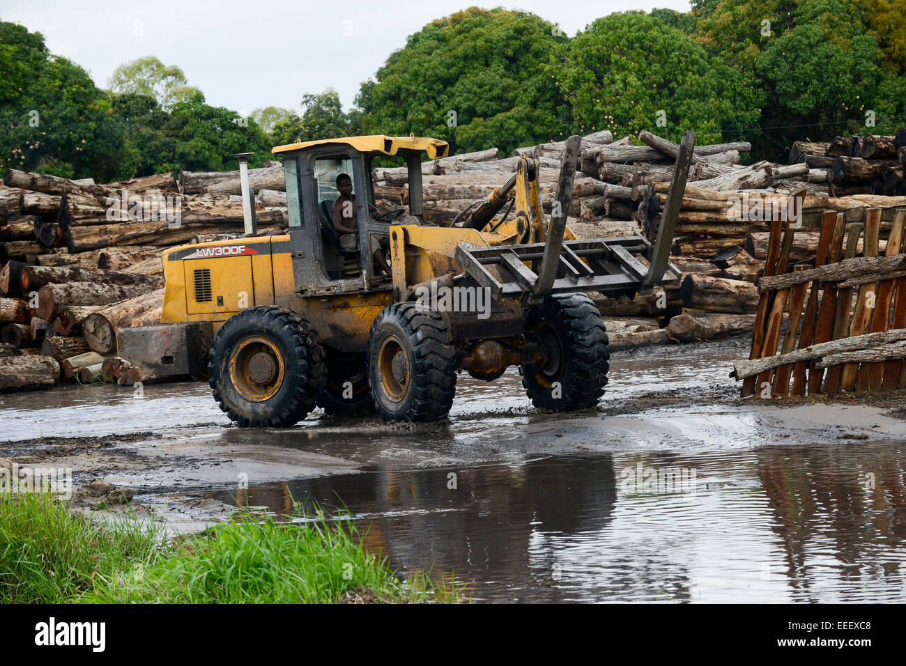 MOZAMBIQUE, Beira, timber trade of chinese companies for export to China, storage place for logged trees from Tete - Stock Image