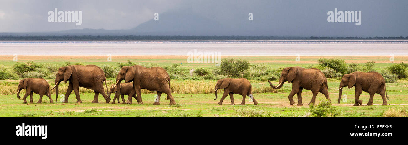 Elephant herd at Lake Manyara National Park Tanzania - Stock Image