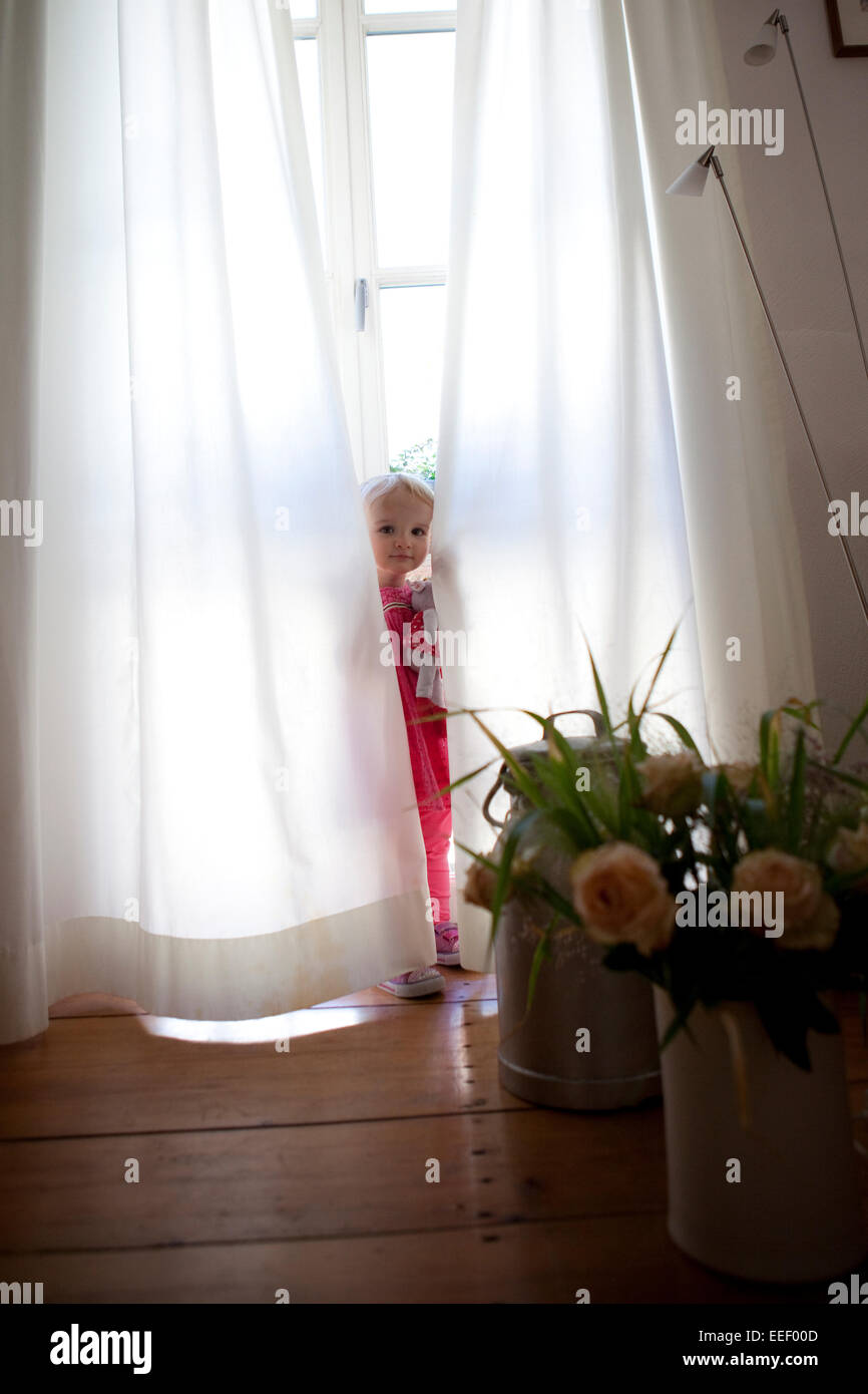 Young girl playing hide and seek behind white, opaque curtains in front of a large window in a house. - Stock Image