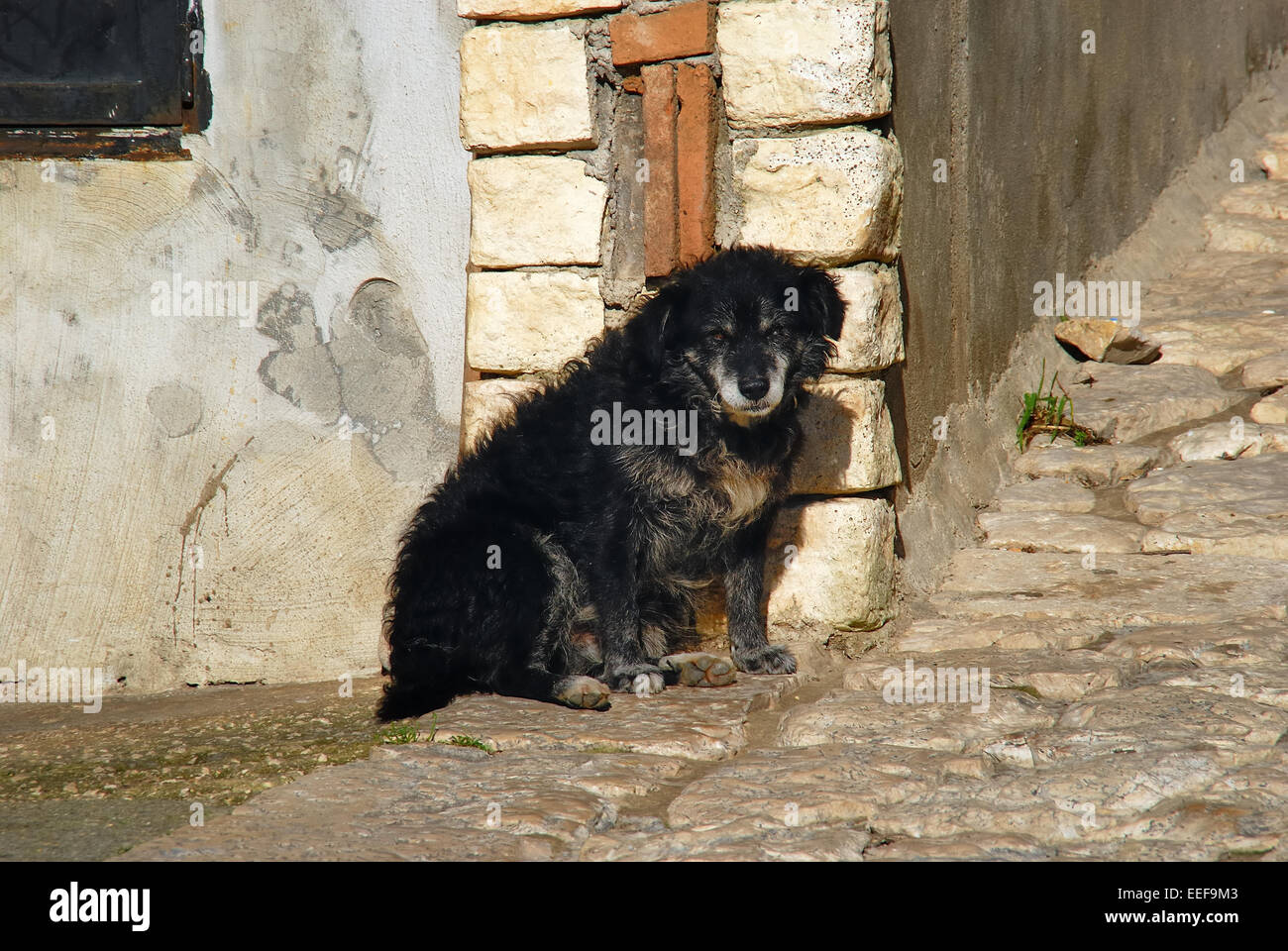 Casertavecchia, Italy. A dog in a narrow street of the village. - Stock Image