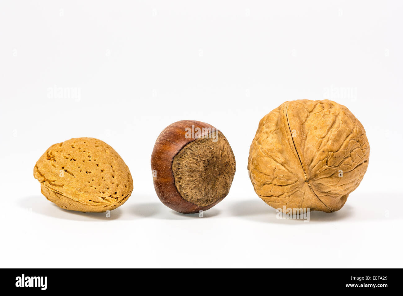 Three nuts with white background - Stock Image