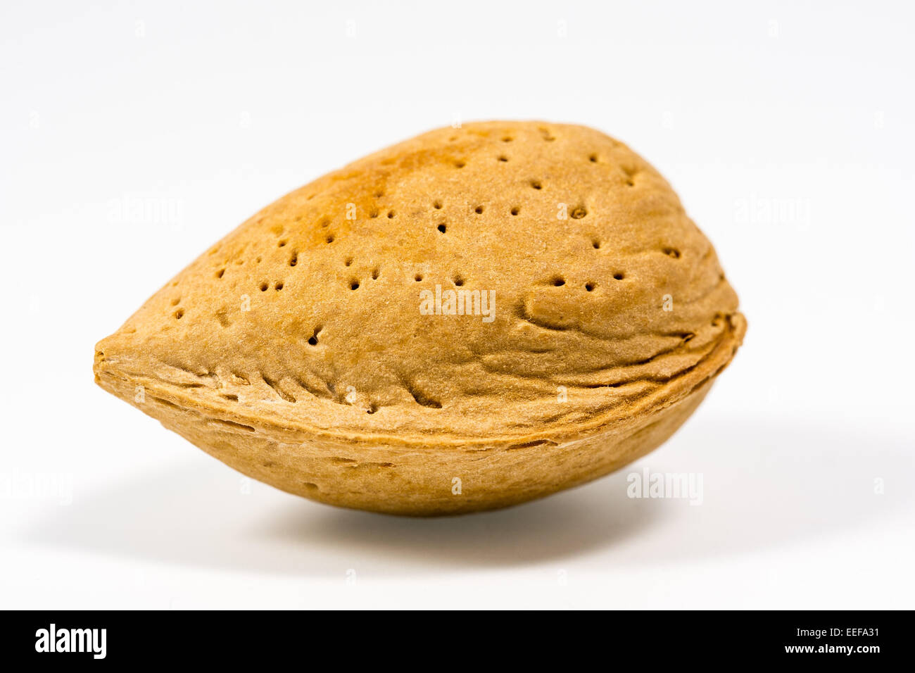 An almond with white background - Stock Image