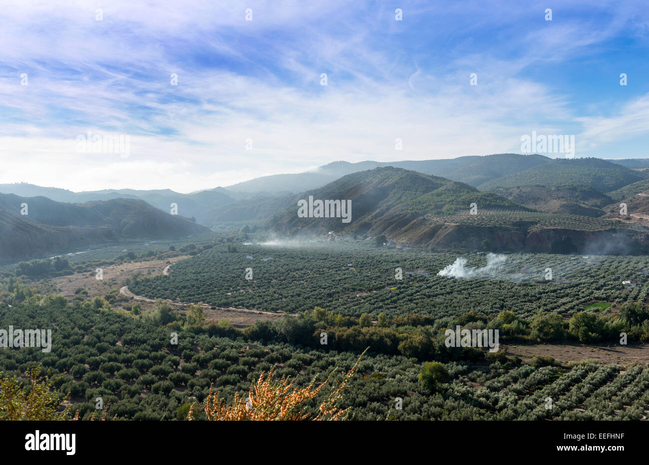 View over Olive Trees near Cazorla Jaen province Andalusia Spain Stock Photo