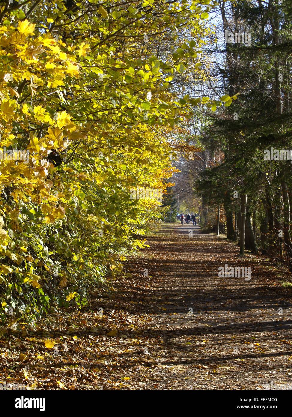 Baum, Baeume, Herbst, Herbstlaub, Blaetter, Farbe, Gelb, Gruen, Jahreszeiten, Natur, Landschaft, Stimmung, Ruhe, - Stock Image