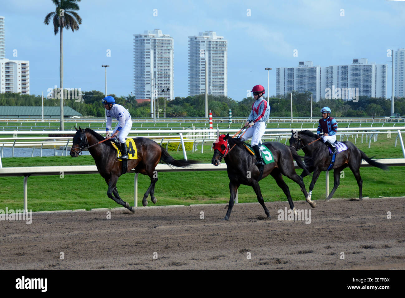 Miami, USA - February 4, 2011: Horse racing teams practice on a race day at Gulfstream Park outside of Miami, Florida - Stock Image