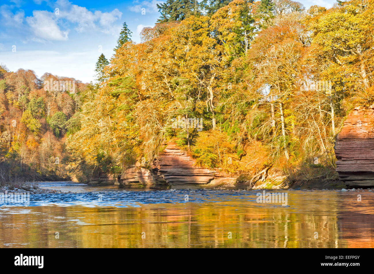 RIVER FINDHORN AND RED SANDSTONE CLIFFS AT DARNAWAY WITH AUTUMNAL TREES LEAVES AND WATER REFLECTIONS - Stock Image