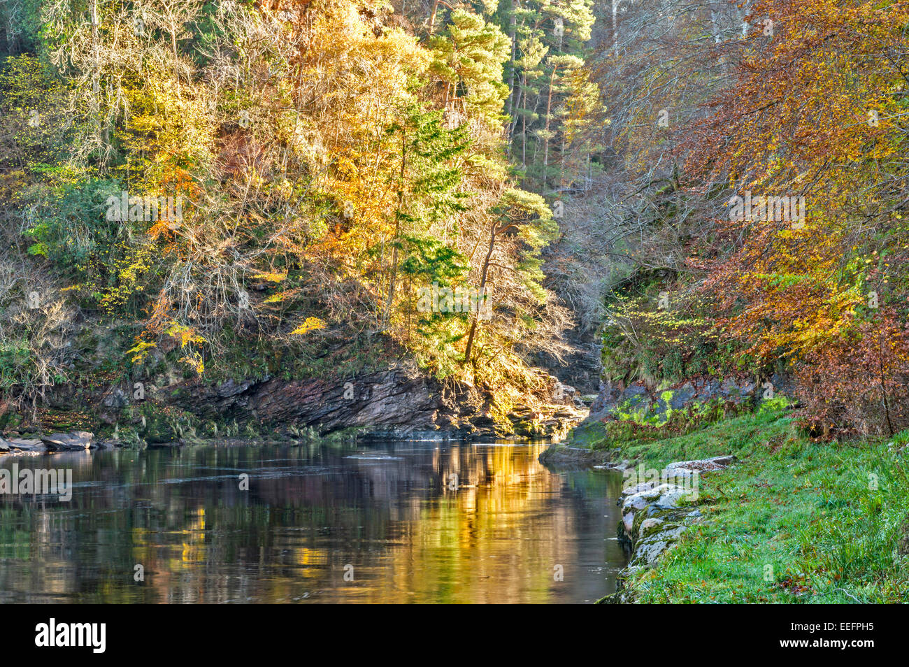 RIVER FINDHORN GORGE AT DARNAWAY WITH AUTUMNAL TREES LEAVES AND WATER REFLECTIONS - Stock Image