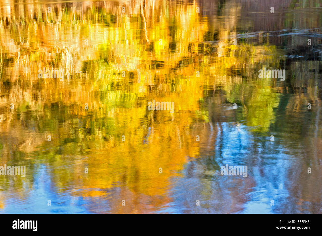 RIVER WATER REFLECTIONS BLUE SKIES AND AUTUMNAL BIRCH TREES AND LEAVES - Stock Image