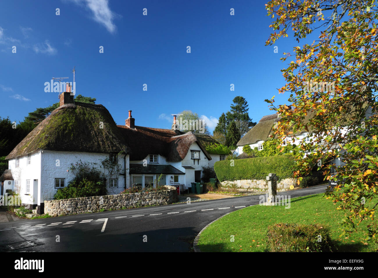 A thatched cottage with a tree in autumn foliage and a village green. - Stock Image