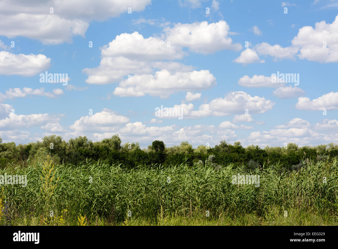 Sky with clouds over the forest in the summer - Stock Image