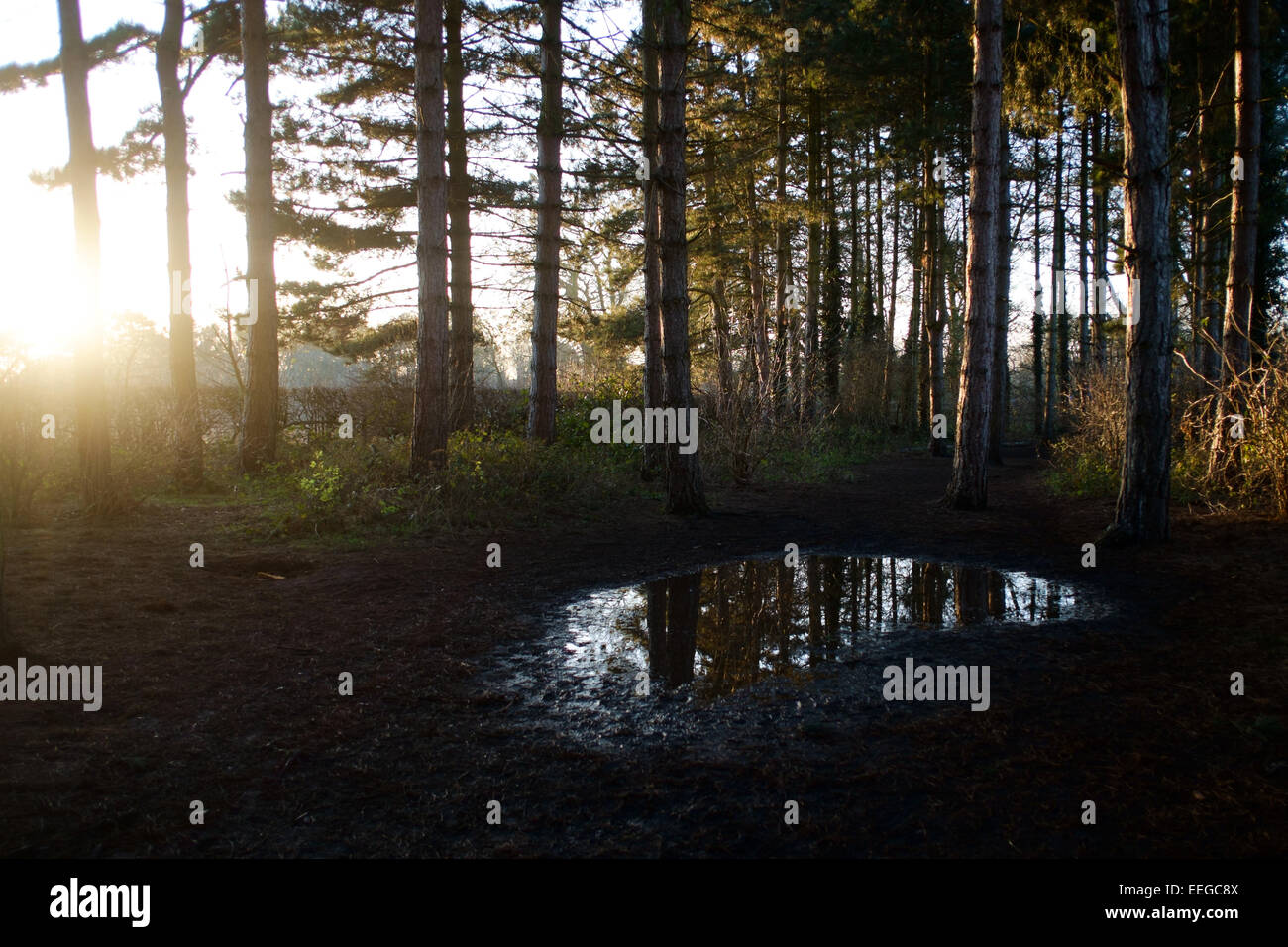 Woodland in winter sunlight - Stock Image