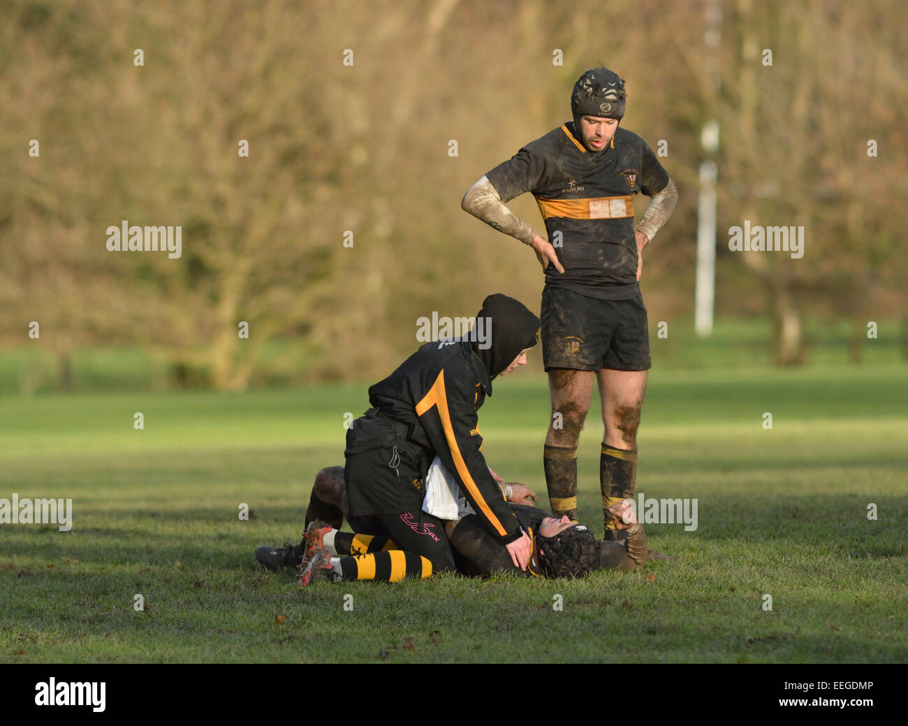 an injured rugby player is attended to by the physiotherapist, while a team member looks on concerned. - Stock Image