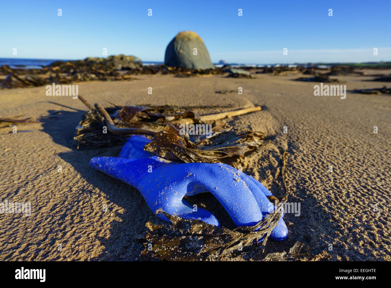 A blue glove washed up on a beach in Scotland. - Stock Image