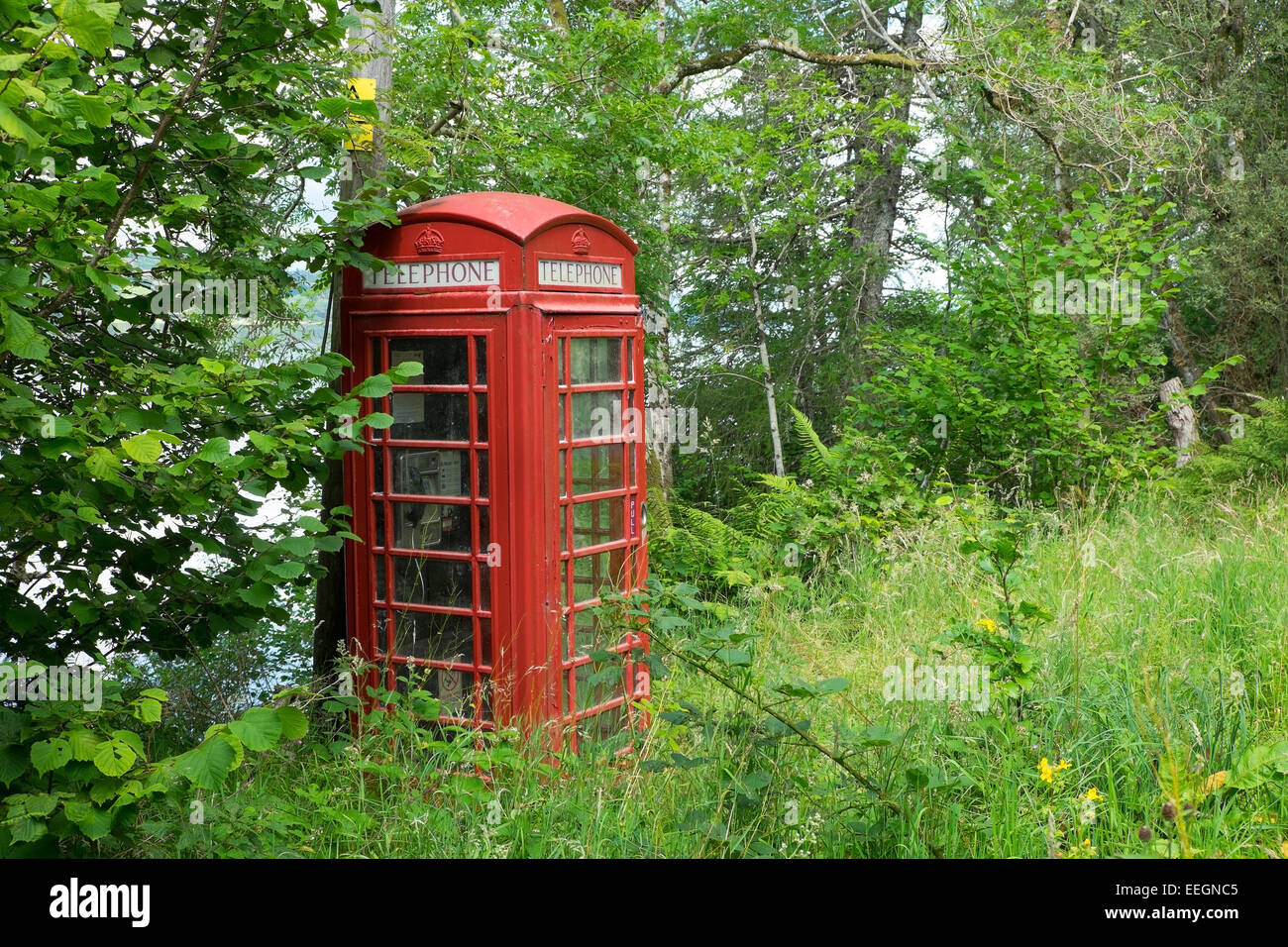 A traditional red telephone box in a country lane, hidden by trees. Scotland. - Stock Image