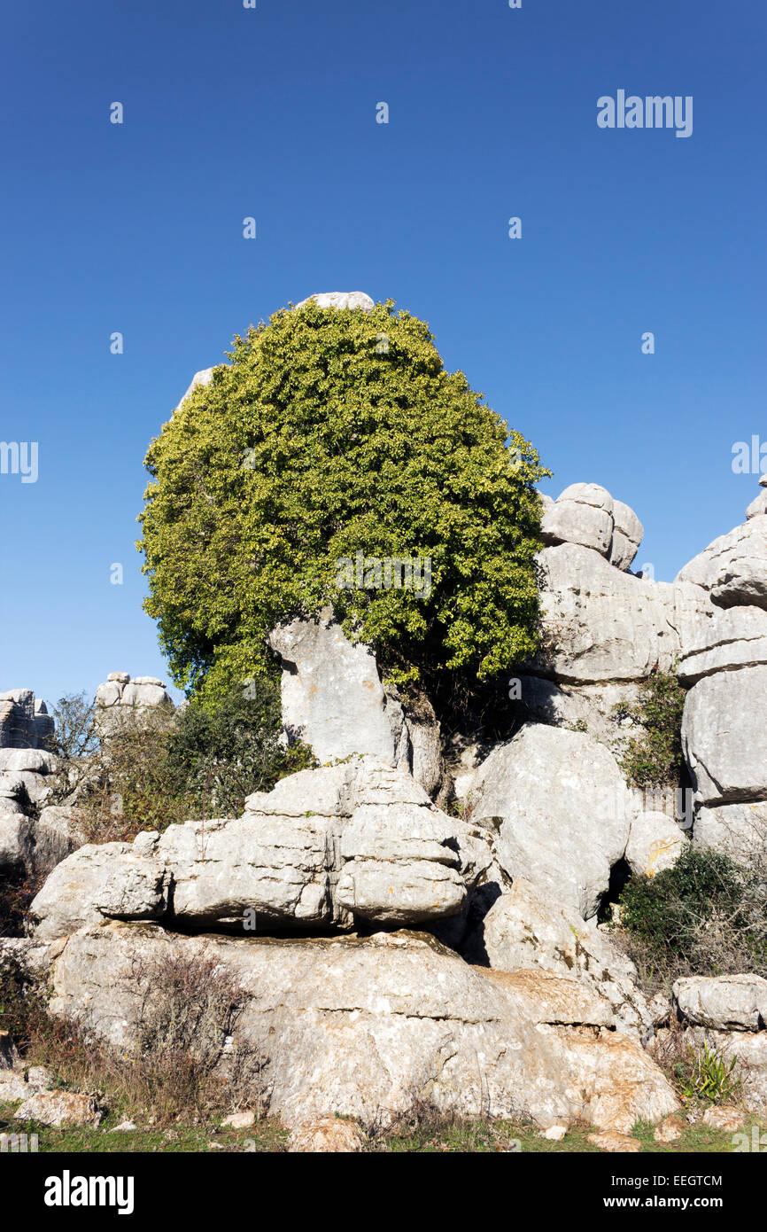 El Torcal de Antequera, Sierra del Torcal, Antequera, Málaga, Andalusia, Spain.  Karstic rock formations - Stock Image