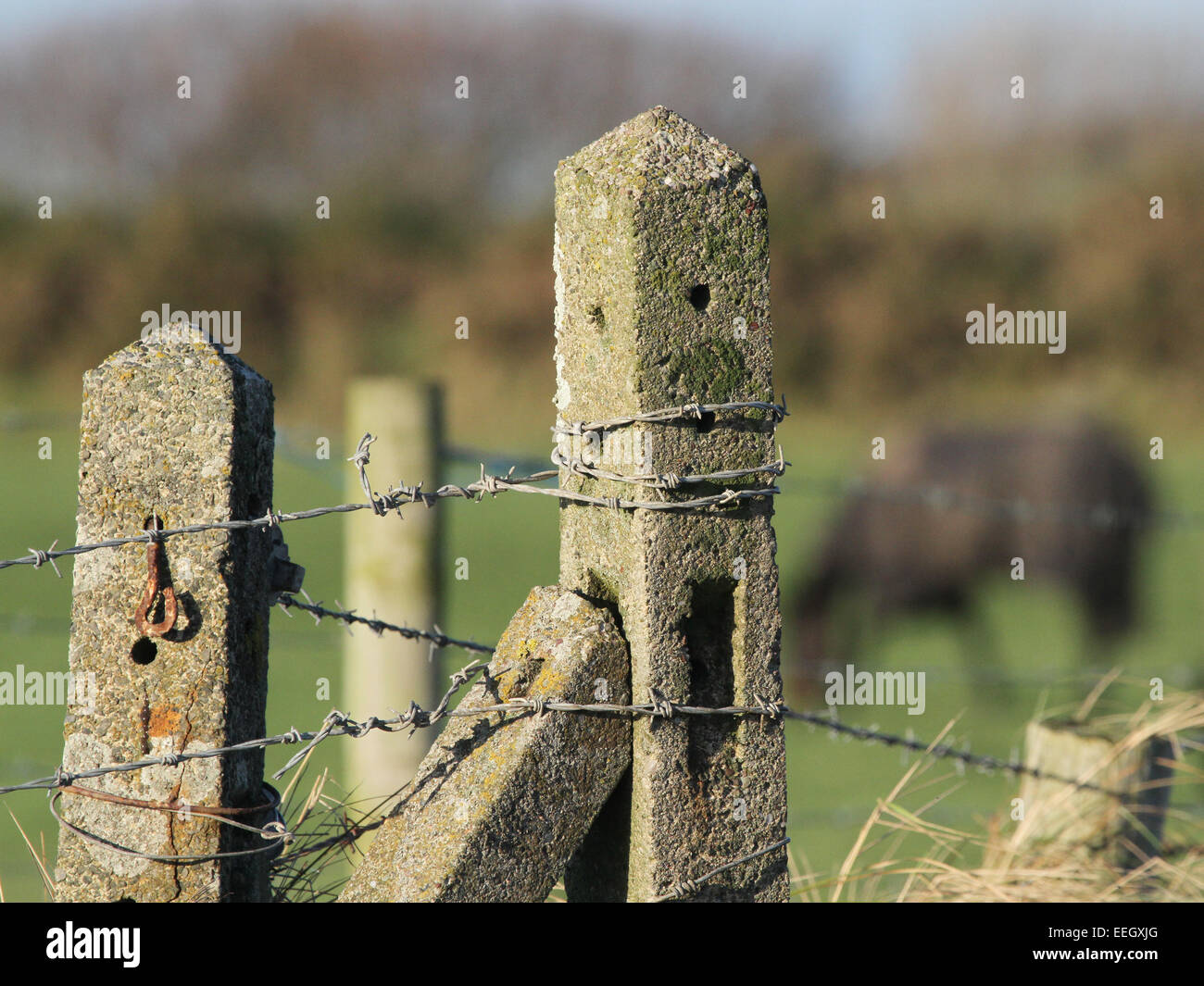 Concrete fence post with barbed wire - Stock Image