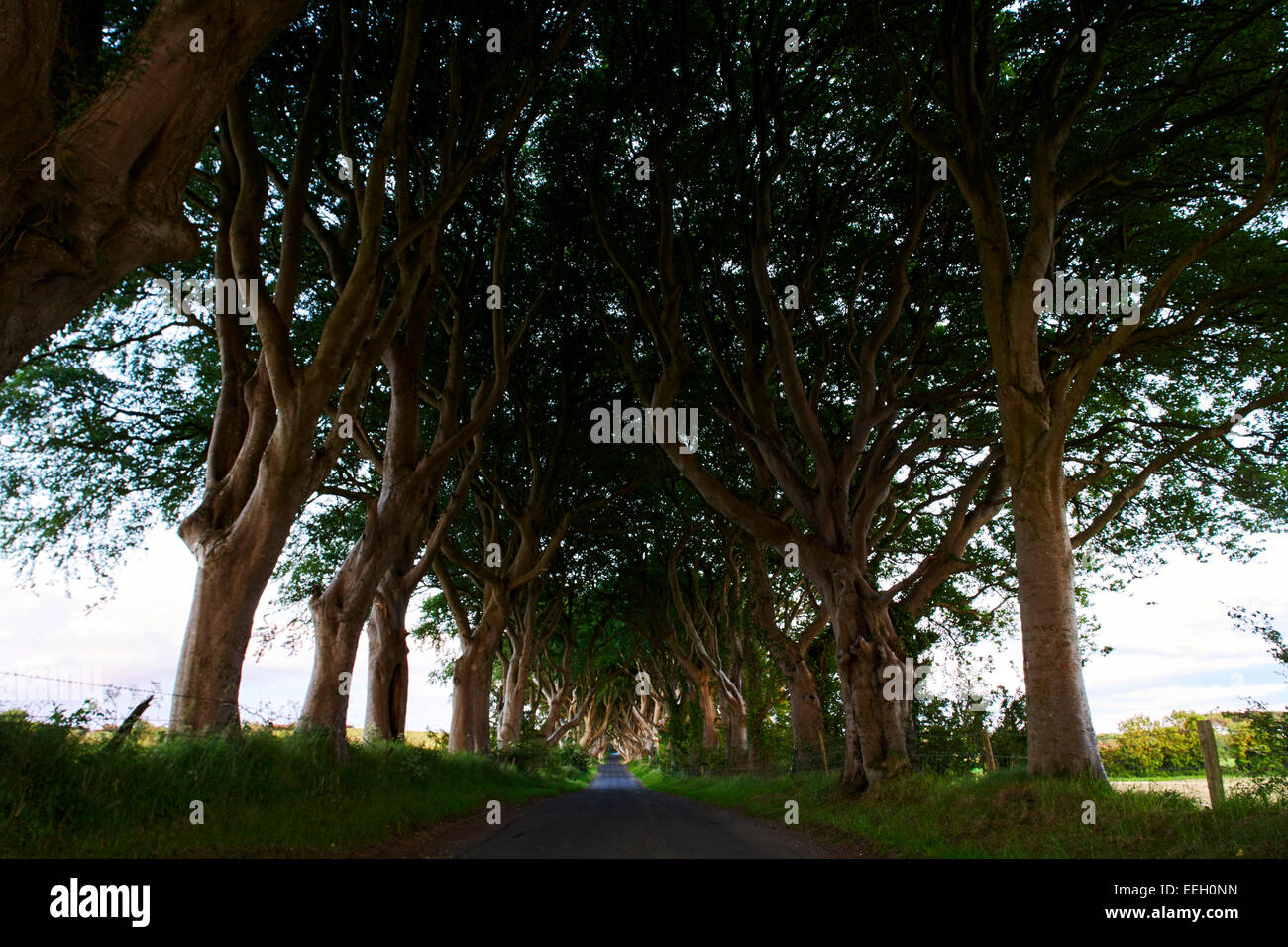 The Dark Hedges Balllymoney Ireland site of the Kings Road in Game of Thrones - Stock Image