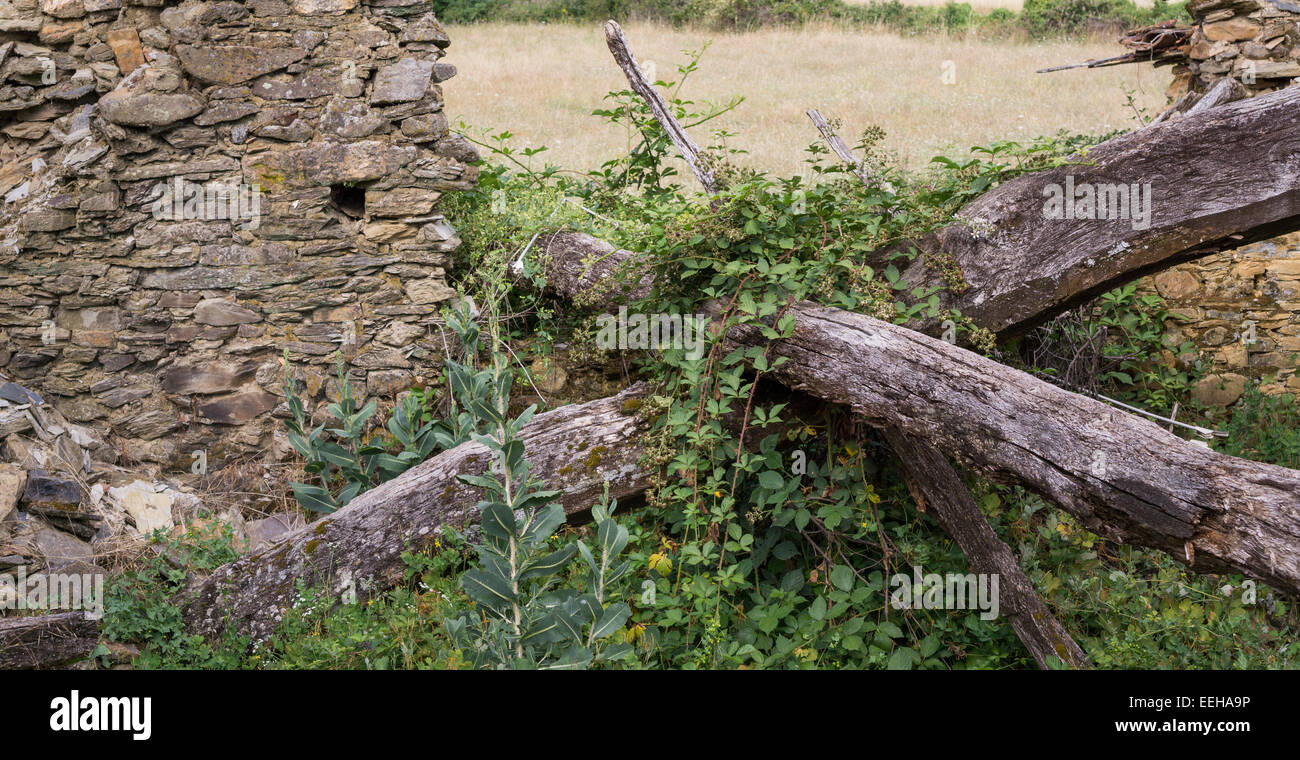 Ruined old stone house and wooden joists - Stock Image