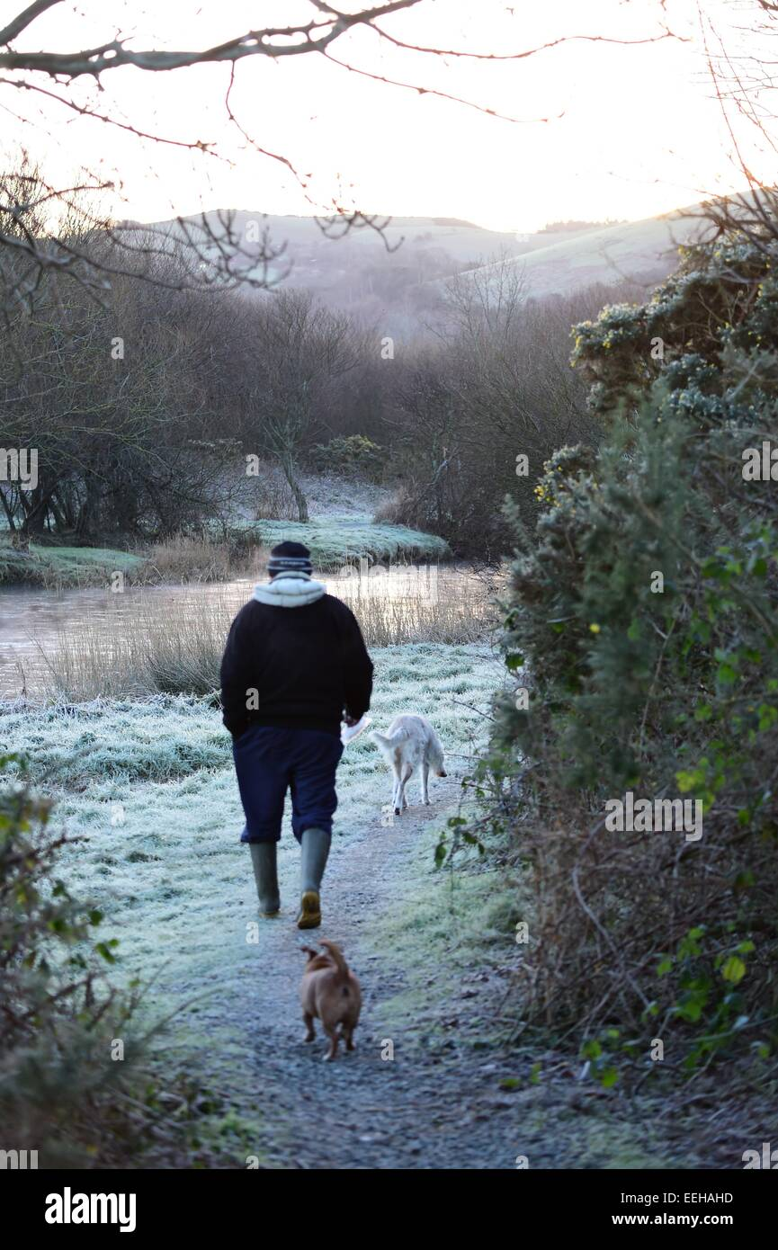 Aberystwyth Wales UK, Monday 19 January 2015 UK Weather: An early morning dogwalker by the River Rheidol as it flows - Stock Image