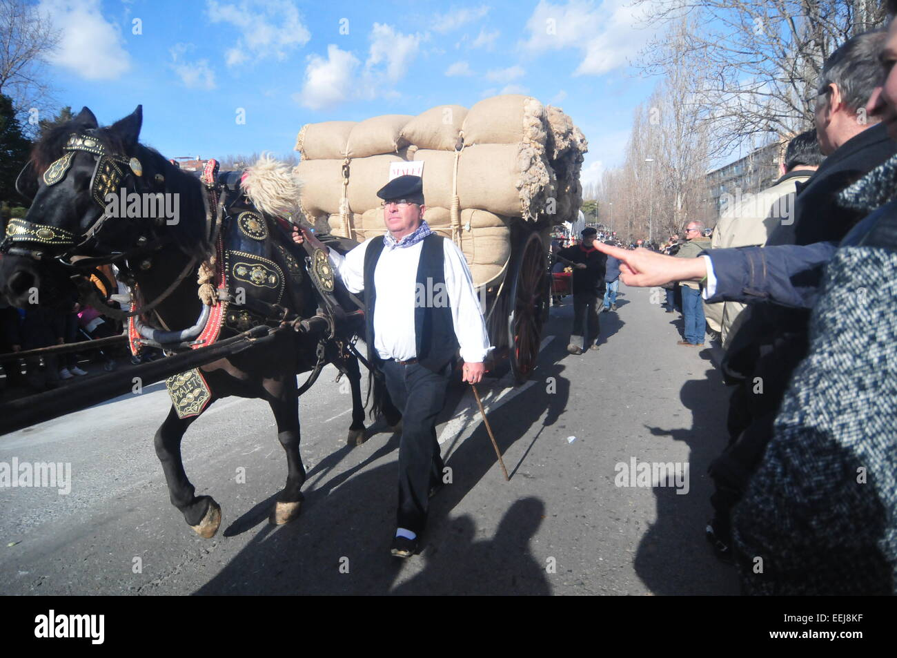 Barcelona, Spain. 18th Jan, 2015. 'Tres Tombs' Parade (Sant Cugat, Barcelona, Spain, January 18th, 2015)A - Stock Image