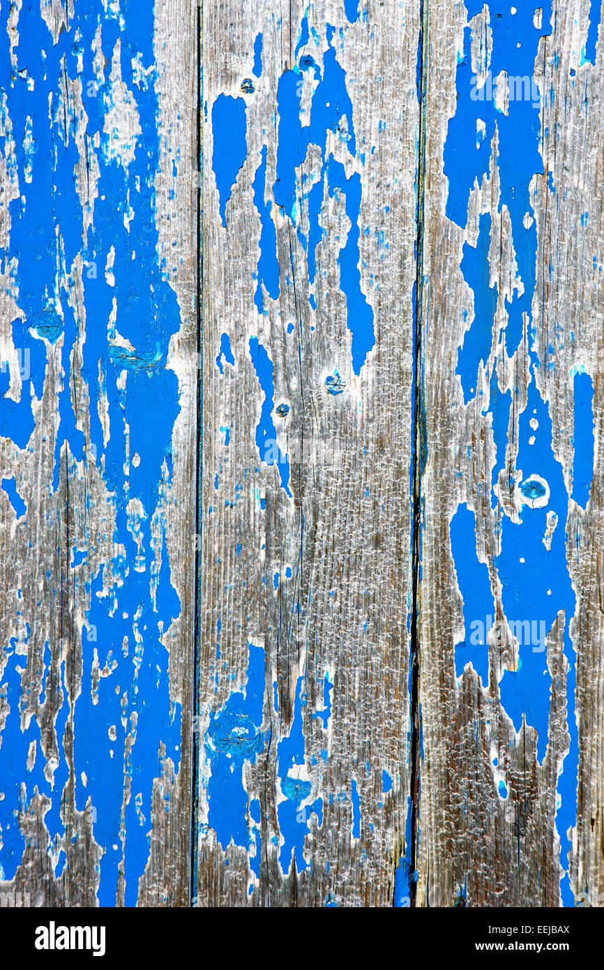 Peeling blue paint giving a distressed look to this section of wooden shed - Stock Image