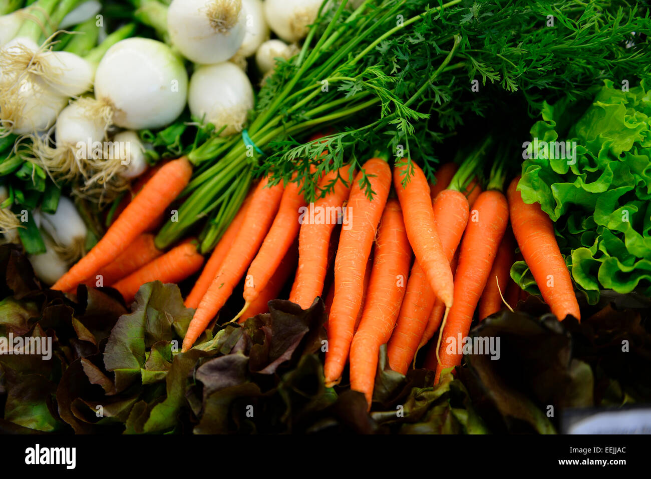 Carrots, Daucus Carota Stock Photo
