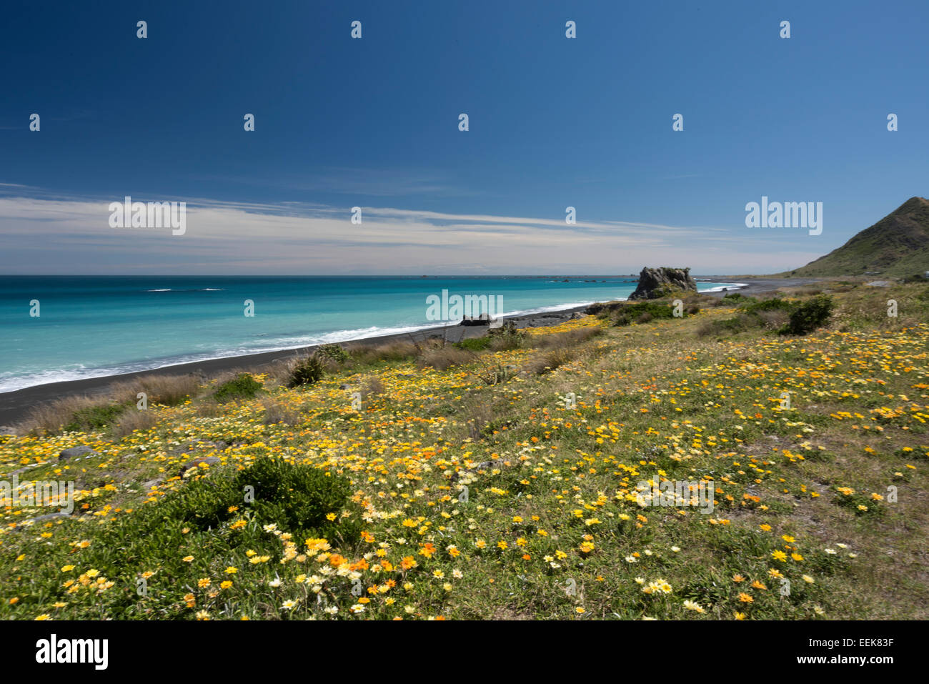 flower meadow near Cape Palliser, newzealand,, Blumenwiese am Cape Palliser, Neuseeland, Nordinsel - Stock Image